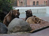Berlin's city bears